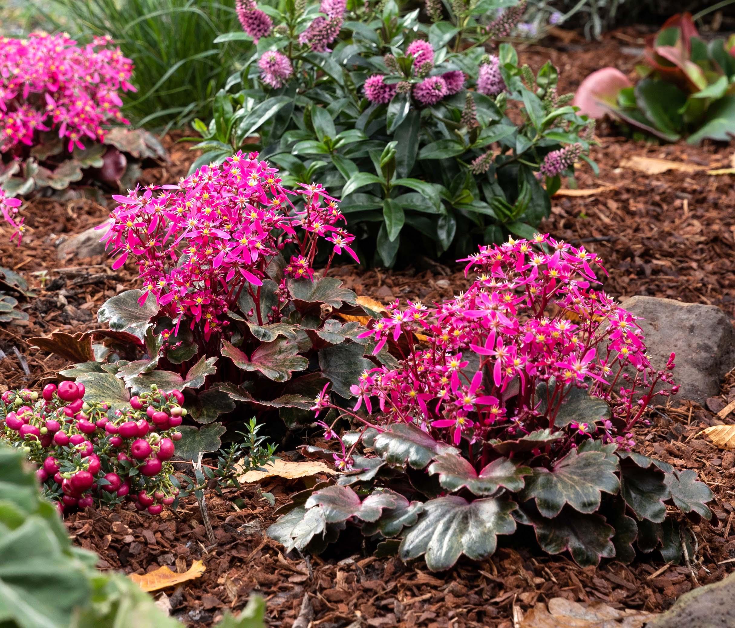 Tipps & Tricks zum Pflanzen im Garten